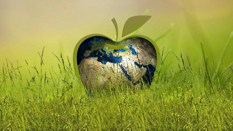 Mercado Libre apoya a emprendedores sustentables latinoamericanos